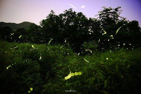 Fireflies Special Trek to Peth (Kothaligad)