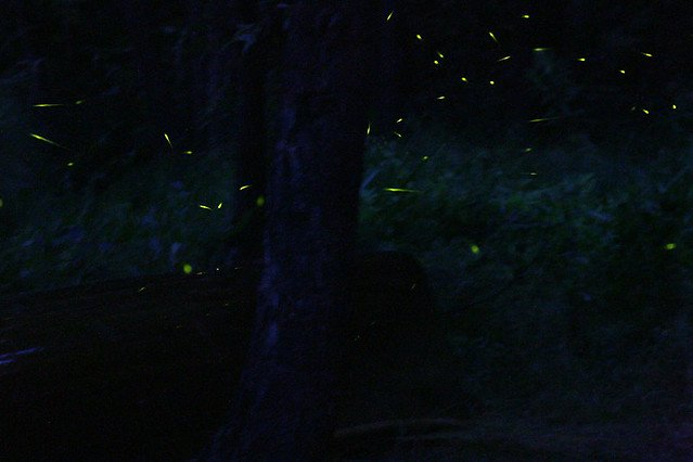 Fireflies Special Trek - Rajmachi - Tour