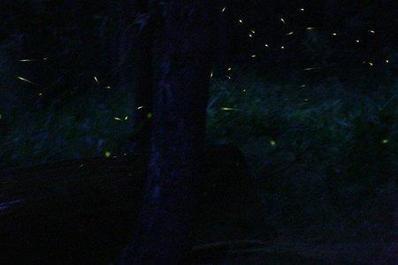 Fireflies Special Trek - Rajmachi