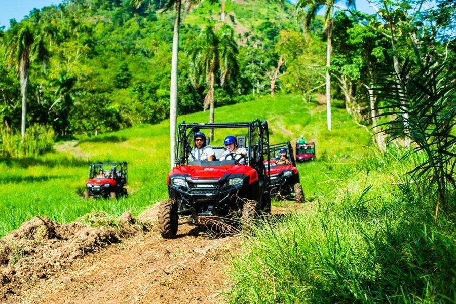 Jungle Buggies - Tour