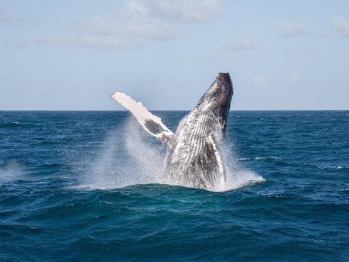 Whale Watching + Cayo Levantado - Tour