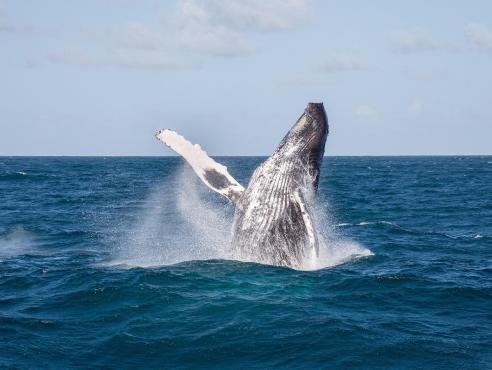 Whale Watching + Cayo Levantado - Tour