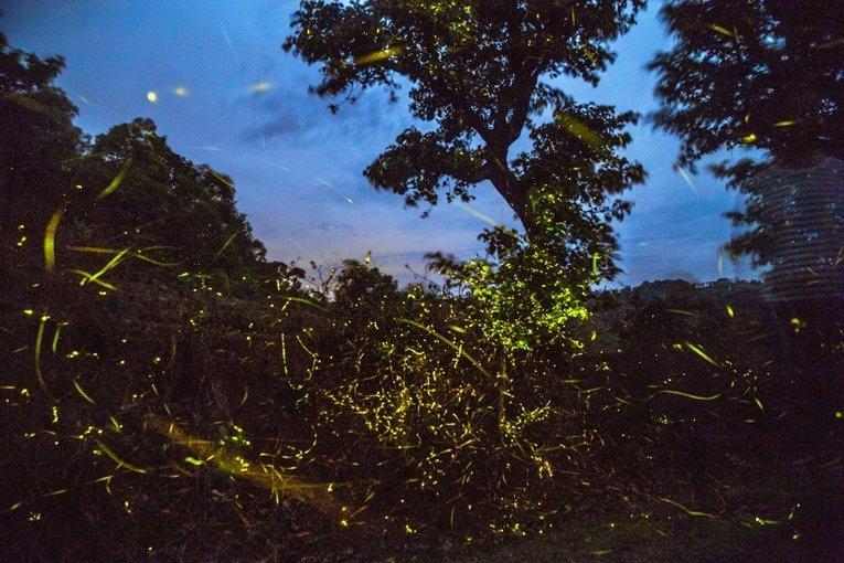 Fireflies Special Trip to Purushwadi - Tour