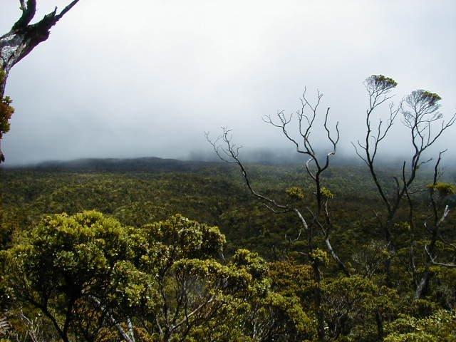 Jungle Trail to Andharban - Tour