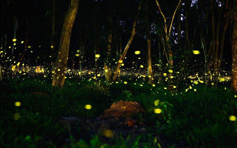 Fireflies Special  trek + Camping at Prabalmachi - Tour