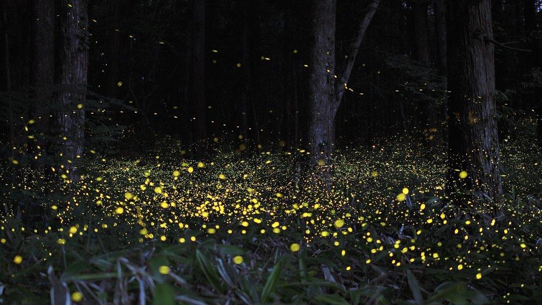 Rajmachi Fireflies Special Trek From Pune - Tour