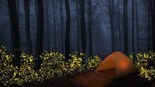 Prabalmachi Fireflies Special Trek From Pune