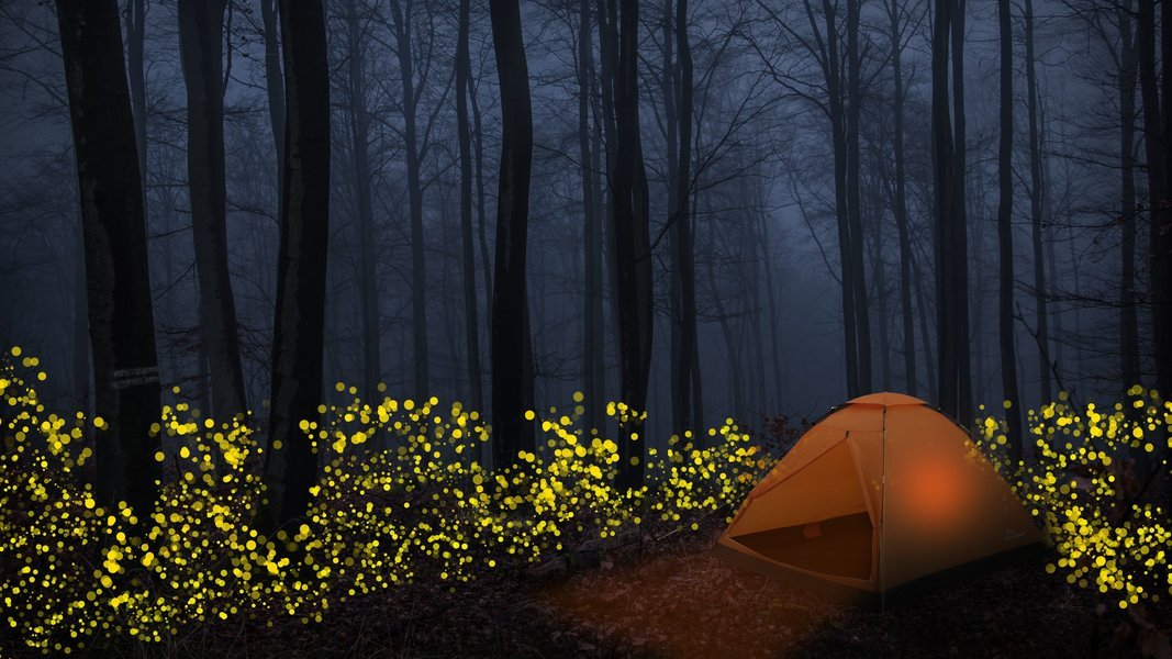 Prabalmachi Fireflies Special Trek From Pune - Tour