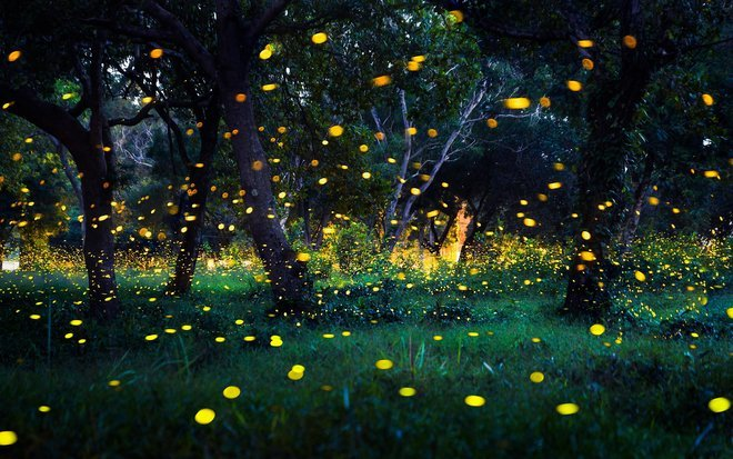 Fireflies Special Trek & Camp - Collection