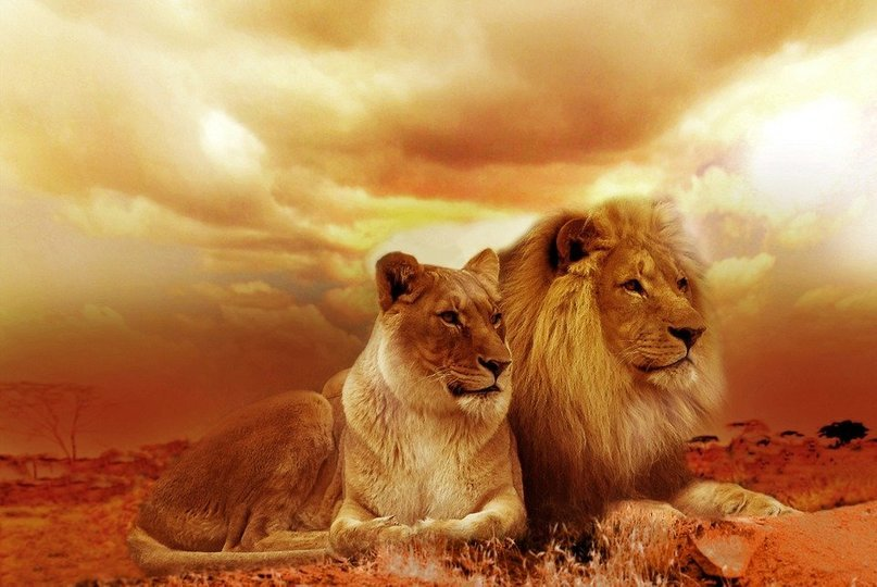 West India Lion Safari - Tour