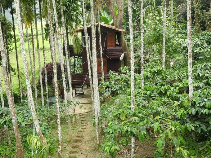 Bliss Home stay Virajpet Coorg - Tour