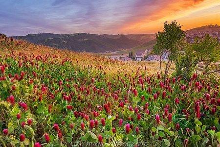 Valley Of Flowers and Hemkund Sahib