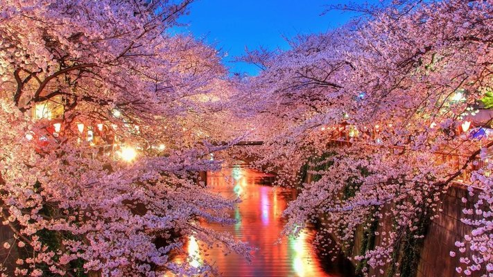 Cherry Blossom Japan with Optional Hiroshima Tour - Tour