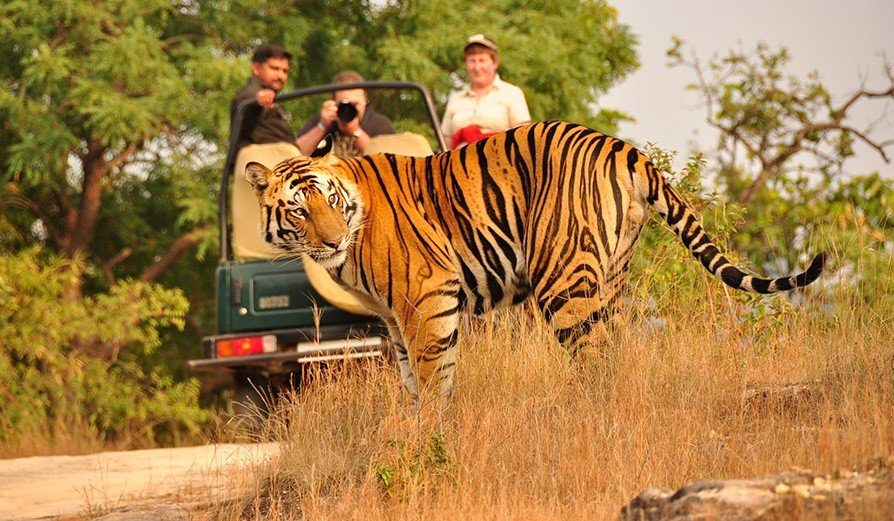 Trip to Tadoba - Tour