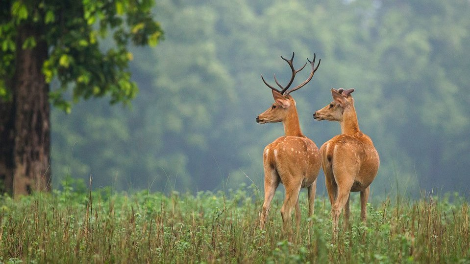 Wilderness of Madhya Pradesh - Tour