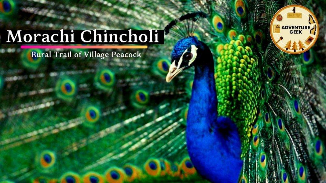 Eco tour to Peacock Village - Morachi Chincholi - Tour