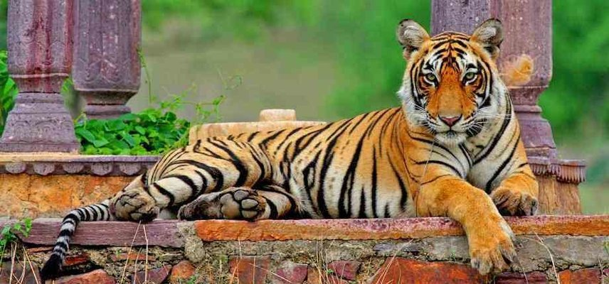Golden Triangle with Ranthambore - Tour