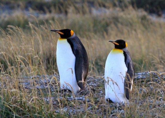 Full Day Tierra del Fuego Pingüino Rey - Tour
