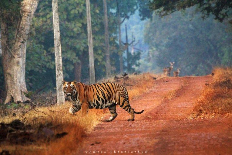 Tadoba –Andhari Tiger Reserve - Tour