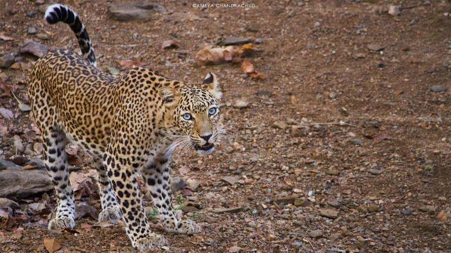 Nagzira - Pench Wildlife Camp - Tour
