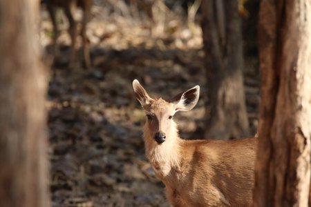 Kanha Wildlife Camp
