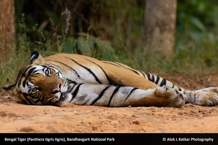 Bandhavgadh National Park - Tour