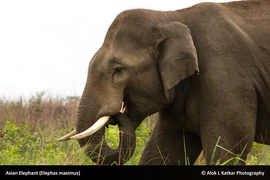 Dudhwa National Park - Tour