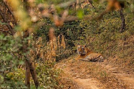 Ranthambore National Park with Jhalana