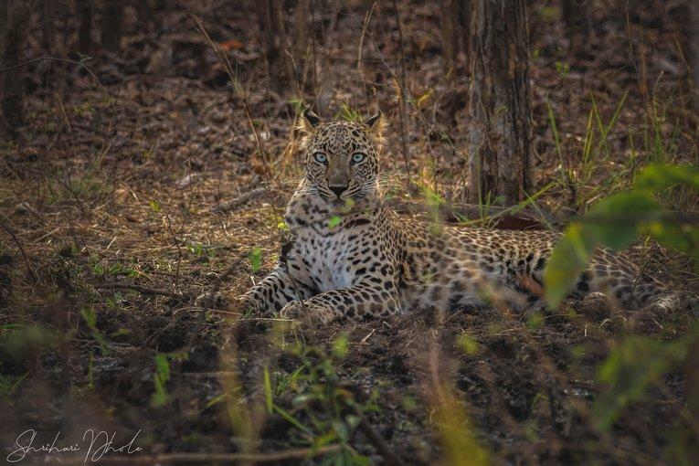 Nagzira Wildlife Sanctuary - Tour