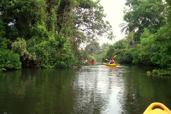 Kayaking (Zuari River Dash in Goa) - Tour