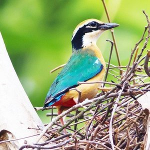 Medium_north_goa_bird_watching_trip-4