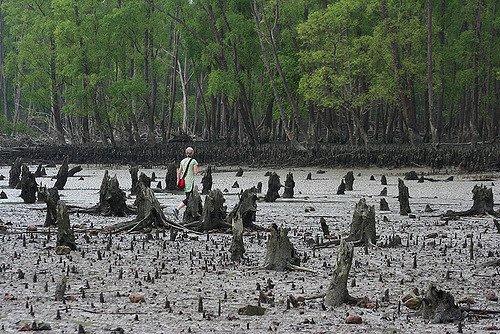Visit Sundarbans with Midland Travels - Tour