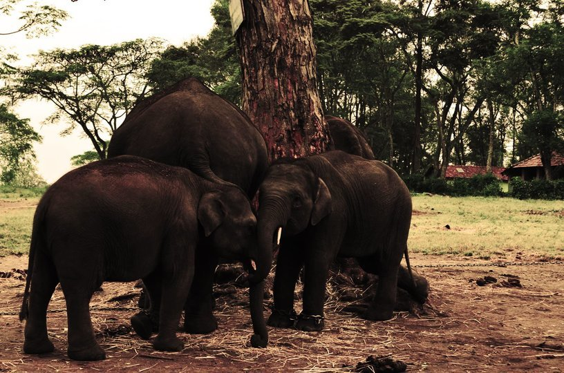 Explore Coorg Package From Mangalore - Tour