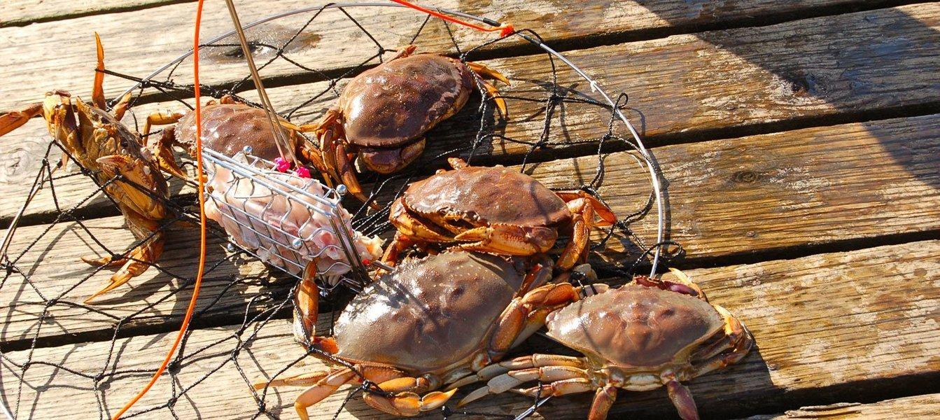 Crab catching trip - 4 hours at Calangute - Tour