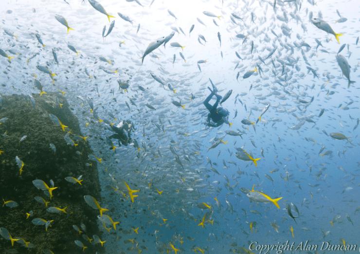 Discover Scuba Diving at Koh Phangan(Deposit Only) - Tour