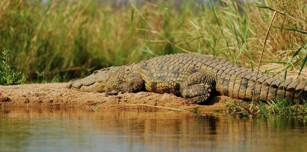 Crocodile Spotting and Bird Watching in Goa - Tour