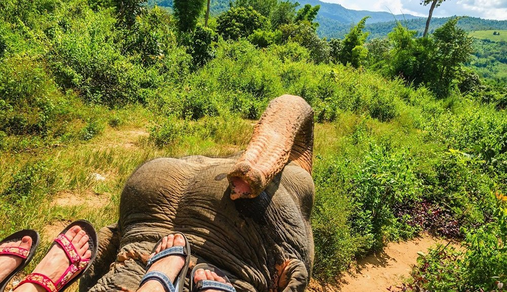 spice Plantation With A Elephant's Day Out - Tour