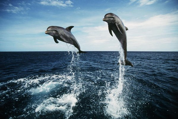 Dolphin Trip in Goa - Tour