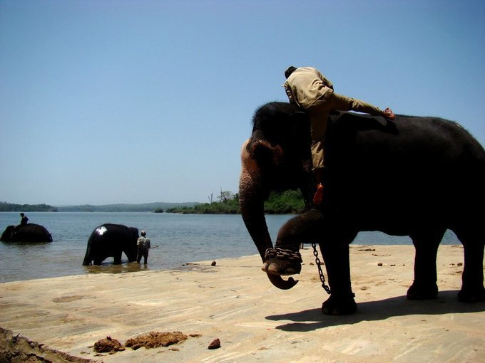 Tiger, Tusker & Temple - by train - Tour