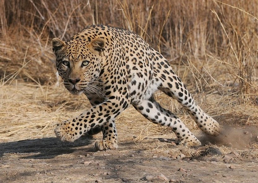 5-Day Serengeti Ngorongoro and Lake Manyara Safari from Mwanza to Arusha - Tour