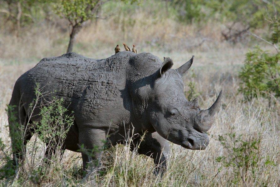 7-Day Serengeti Ngorongoro Lake Manyara and Tarangire Safari from Mwanza to Arusha - Tour
