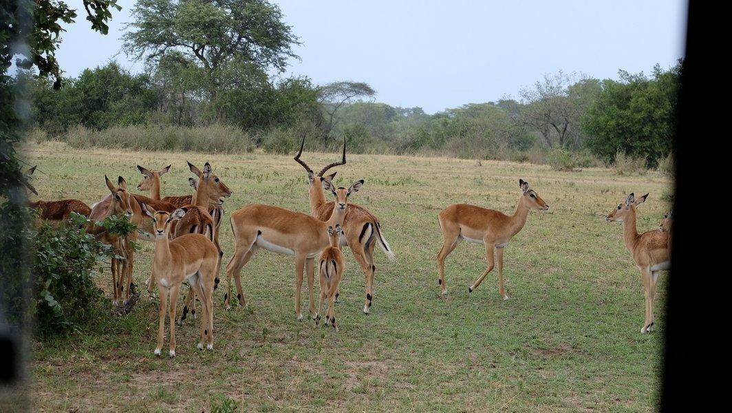 4-Day Serengeti Family Safari from Mwanza - Tour