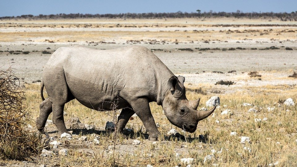 3-Day Safari to Ngorongoro Crater, Tarangire and Lake Manyara from Arusha - Tour