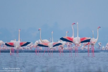 THANE CREEK FLAMINGO SANCTUARY