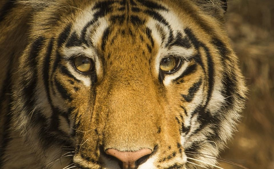 Kanha Wildlife Safari - Tour
