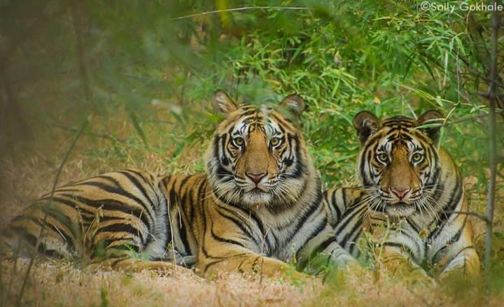 Tiger Marathon 2019 (MP Circuit) - Tour