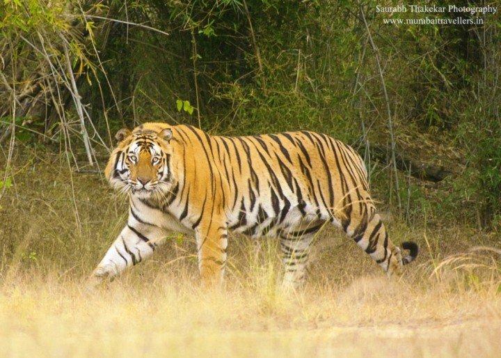 Bandhavgarh Wildlife Safari - Tour