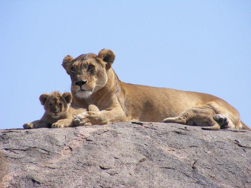 9-Day Best of Tanzania Wildlife Safari from Arusha - Tour