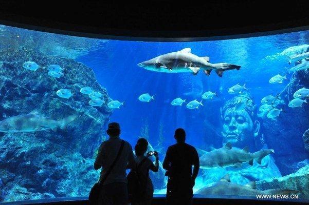 Sea Life Ocean World, Bangkok - Tour