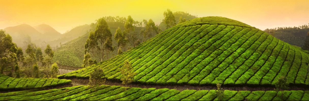 Kerala Package - Tour